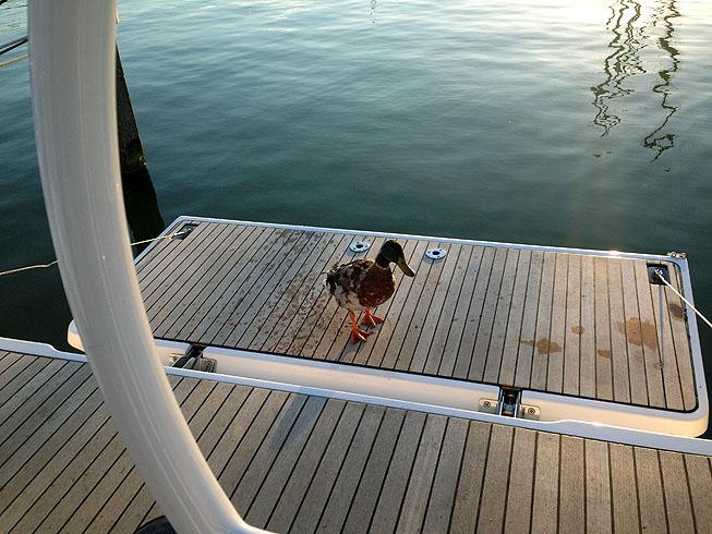 Enten Begrüßung